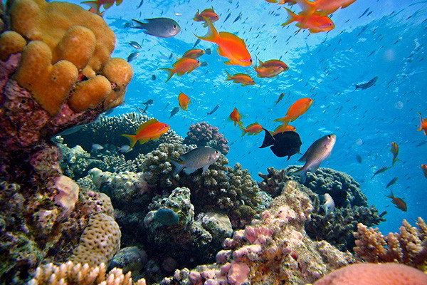 Bali Dive Site - Amed
