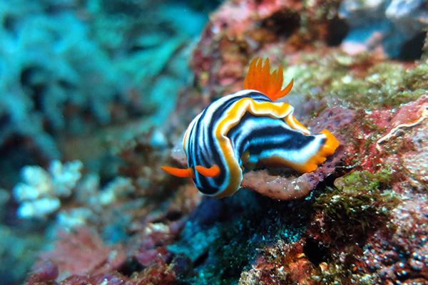 Bali Dive Site - Nusa Lembongan - Nusa Penida