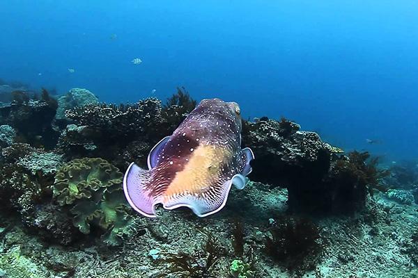 Bali Dive Site - Padang Bai