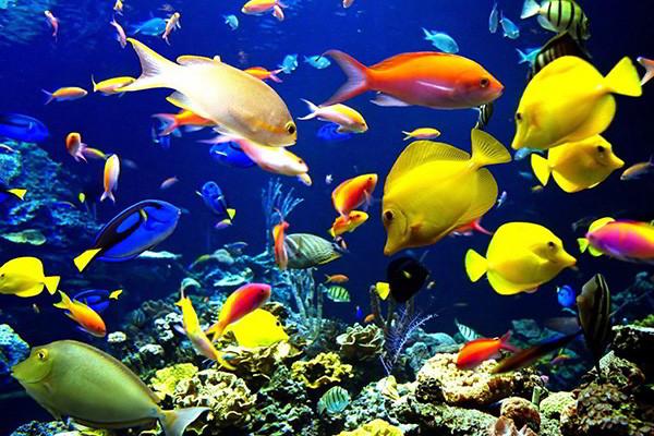 Bali Dive Site - Menjangan